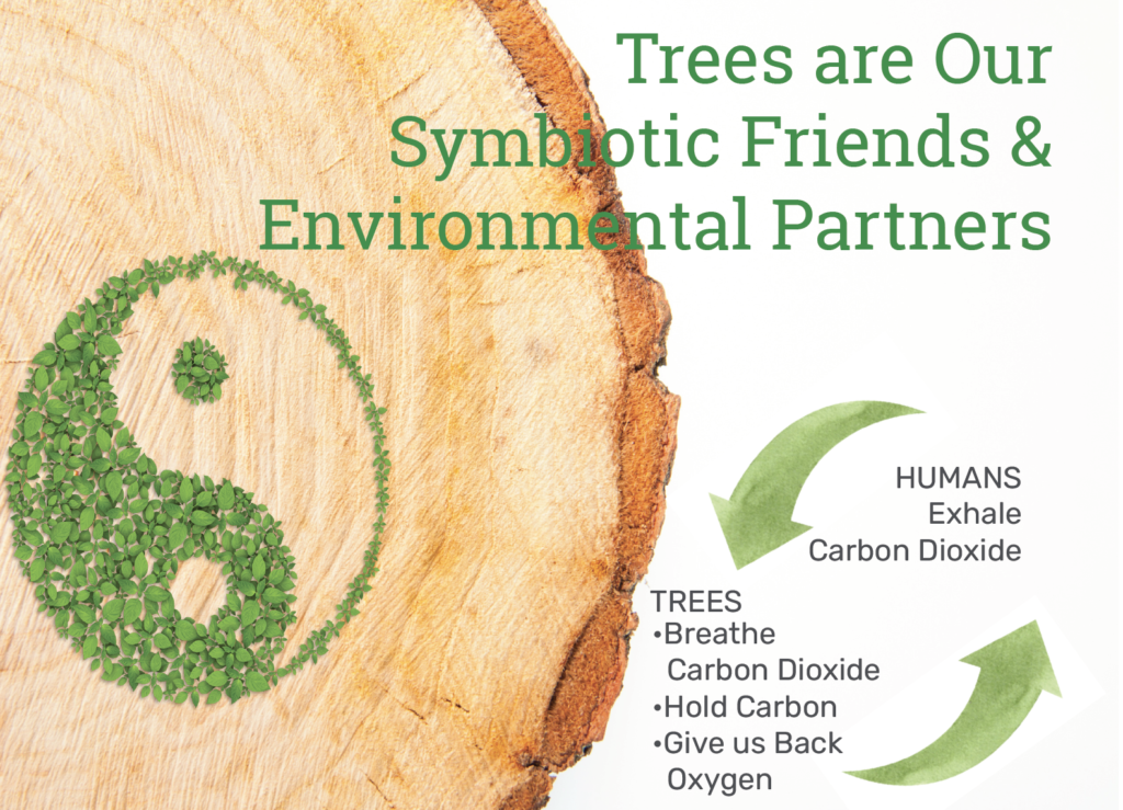trees are symbiotic partners